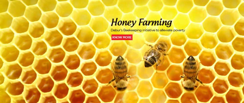 Honey Farming
